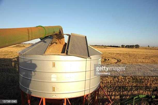 A combine offloads freshly harvested wheat into a silo near Balliang south west of Melbourne Australia on Thursday Jan 19 2012 Australia's main...