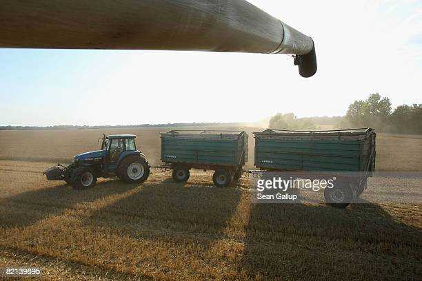 A combine prepares to dump harvested wheat into a tractor's trailers at a field near Juehnsdorf on July 31 2008 near Berlin Germany Though world food...