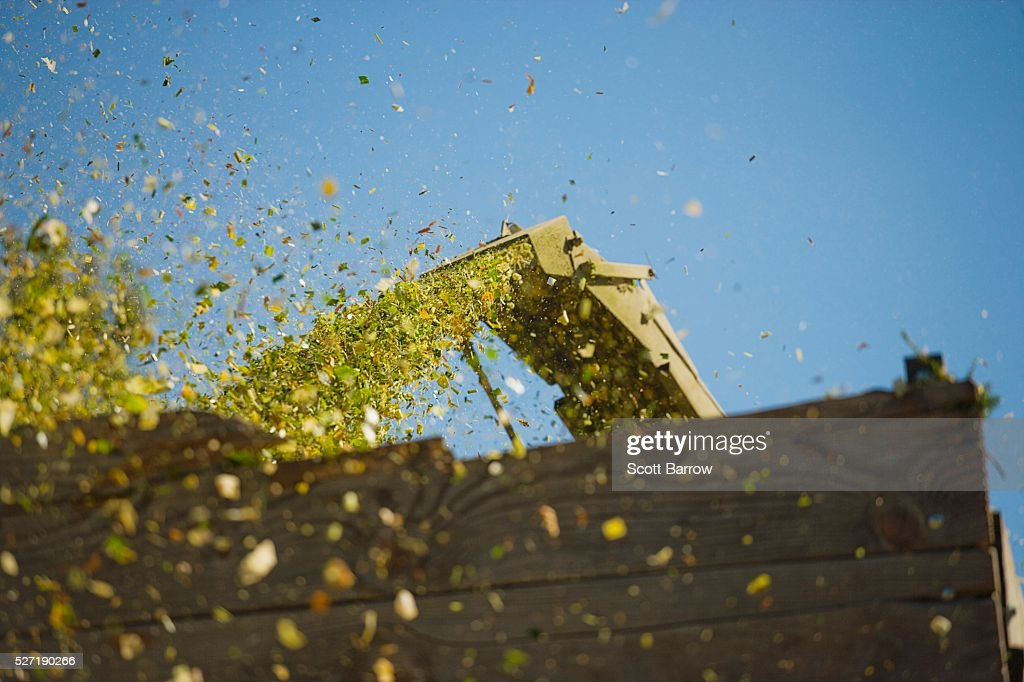 Combine shooting grain into a bin : Foto de stock