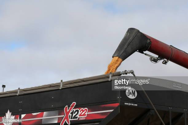 A combine unloads corn into a grain cart during a harvest at a farm near Carman Manitoba Canada on Saturday Oct 10 2020 Costs of staples slumped at...