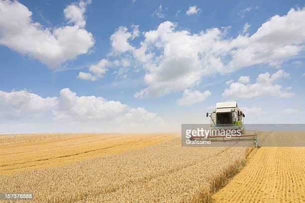 Combine working on a wheat field