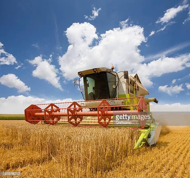 Combiner travaillant sur le champ de blé