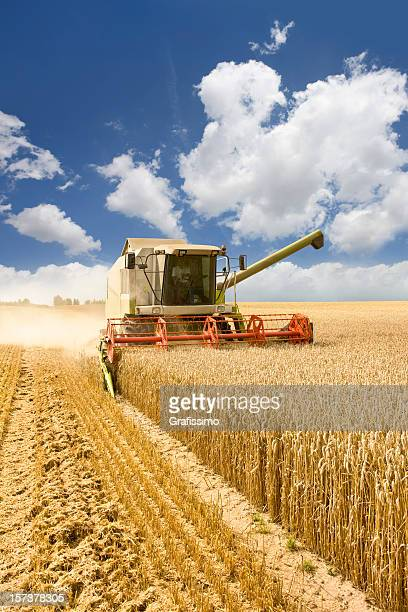 combine working on a wheat field - wheat harvest stock pictures, royalty-free photos & images