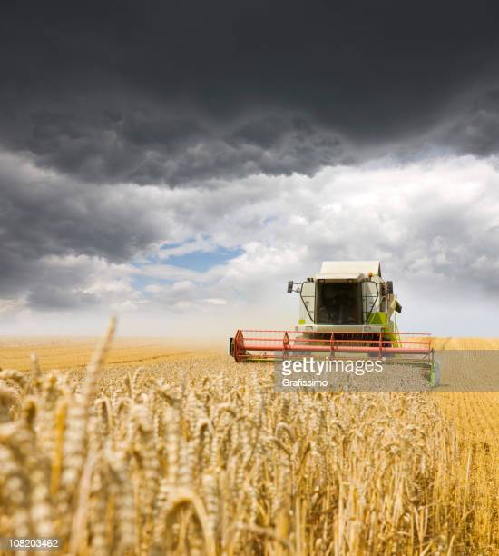 Combine working on a wheat field with Overcast Sky