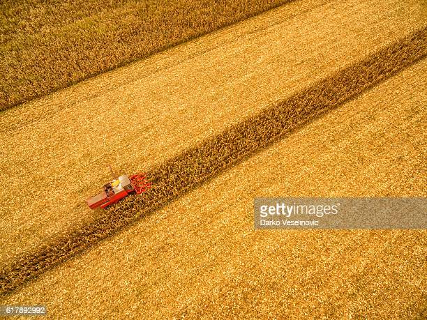 Combine working on the corn field