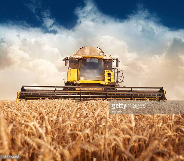 combine working on the field - combine harvester stock pictures, royalty-free photos & images