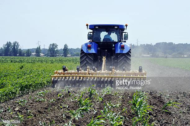 A combineharvester destroys plants of transgenic corn on the 11 hectares field of cereal farmer Jacques Bauville on June 6 in Saubens southern France...