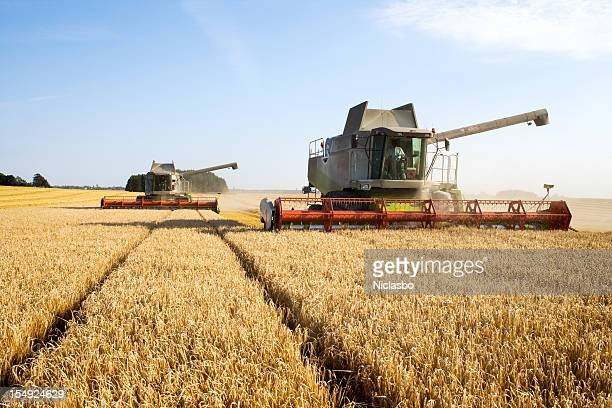 Combines at work