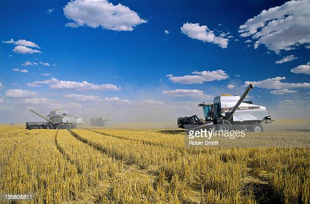Combines harvesting wheat crop, Wee Waa area, NSW, Australia