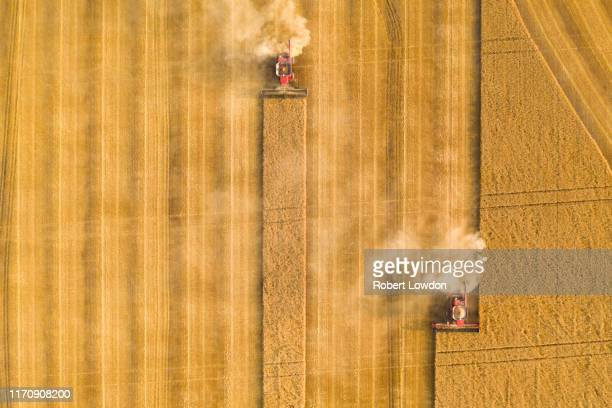 combines - wheat stock pictures, royalty-free photos & images