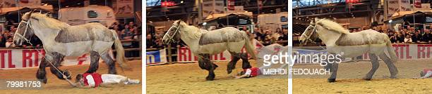 A combo made 25 February 2008 shows a man falling as he tries to hold a Poitevin a draft horse from the Poitou area of France in Paris during the...
