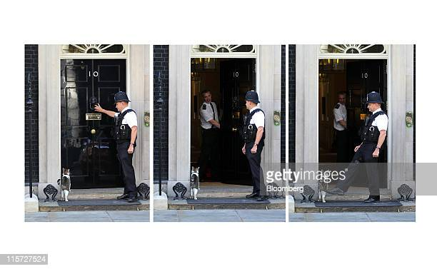 A combo photo shows a policeman helping 'Larry' the Downing Street cat into 10 Downing Street the official residence of the UK prime minister David...