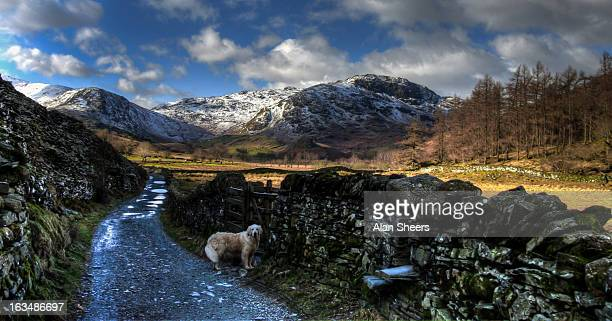 come on dad! - cumbria stock photos and pictures