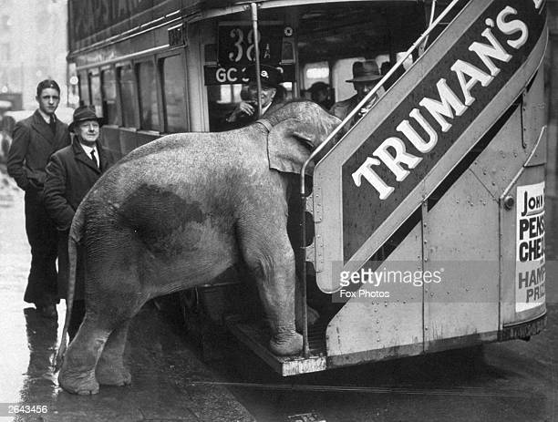 Comet an elephant from Chessington tries to board a bus in Shaftesbury Avenue London