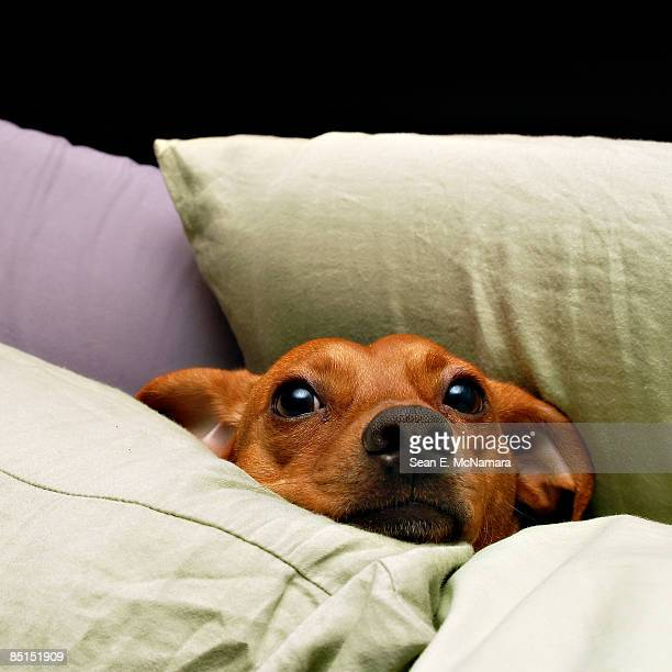 comfortable dog - cushion stock pictures, royalty-free photos & images