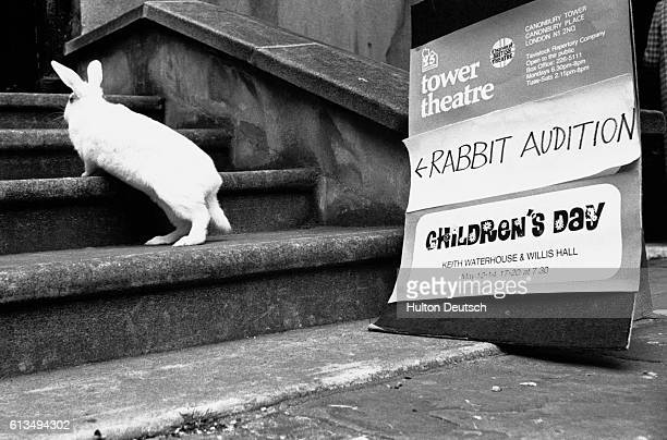 A comic photo of a white rabbit climbing the steps of the Tower Theater in London England to attend an 'audition' | Location Tower Theatre London...