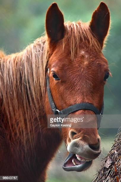 comical horse face - bouche des animaux photos et images de collection