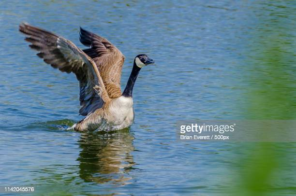 coming in for a landing - for stock pictures, royalty-free photos & images