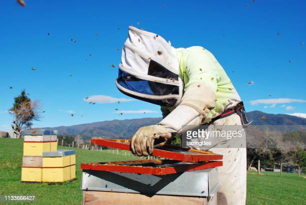 commercial apiarist in a bee suit at work in winter - beehive new zealand stock pictures, royalty-free photos & images