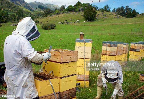 Commercial Beekeepers with Beehives
