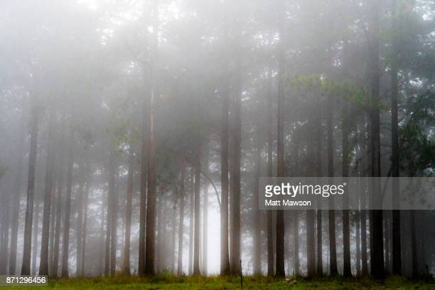 commercial lumber forests in the north eastern south african countryside in mpumulanga province south africa - マプマランガ州 ストックフォトと画像