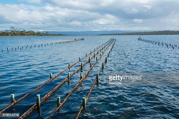 Commercial oyster leases Freycinet Marine Farm Coles Bay Tasmania Australia