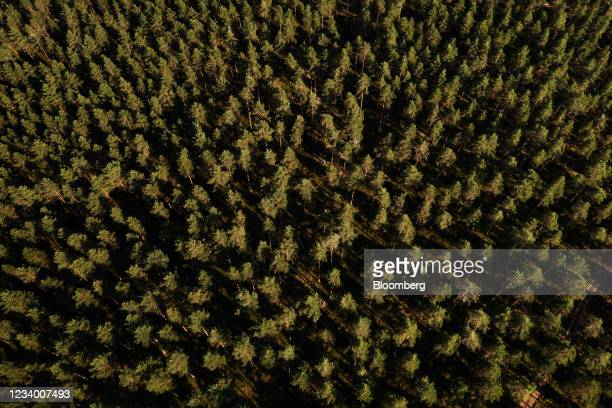 Commercial pine forest in Kisko, Finland, on Thursday, July 15, 2021. The European Union is fleshing out the part of its climate plan to absorb more...