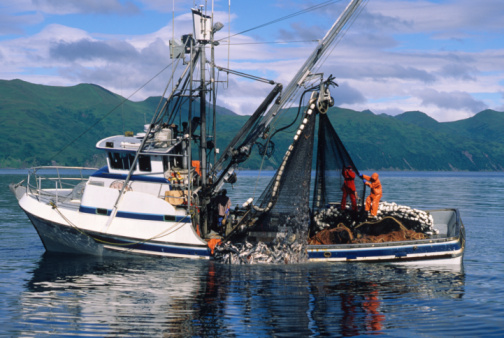 Commercial Salmon fishing 91785902