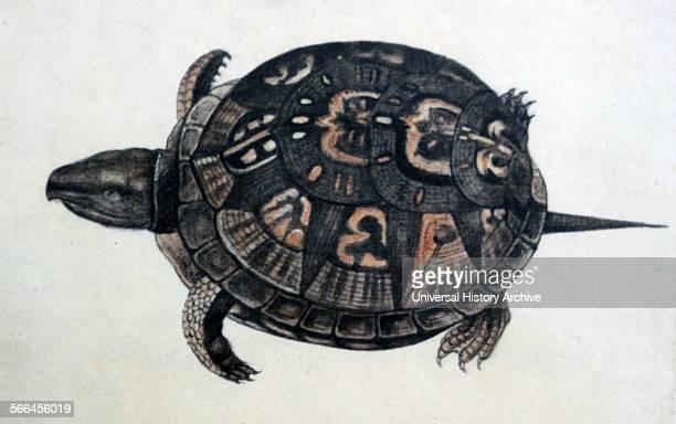 Common box turtle by John White