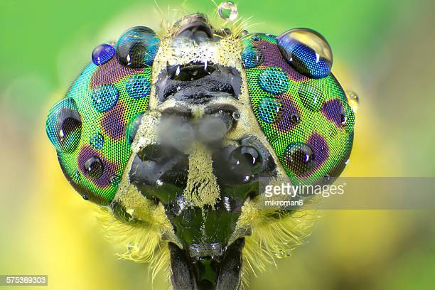 common horse fly head - bug eyes stock photos and pictures