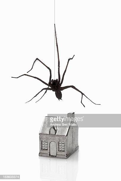 Common house spider suspended above a model house