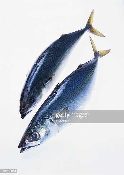 common mackerel - mackerel stock pictures, royalty-free photos & images