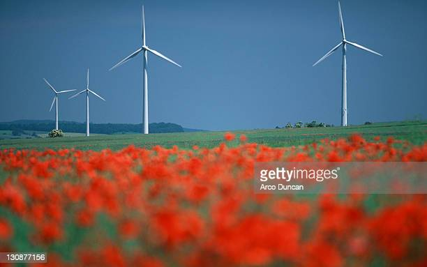 common poppies and windmill park, lower saxony, germany / (papaver rhoeas) - mohn pflanze stock-fotos und bilder