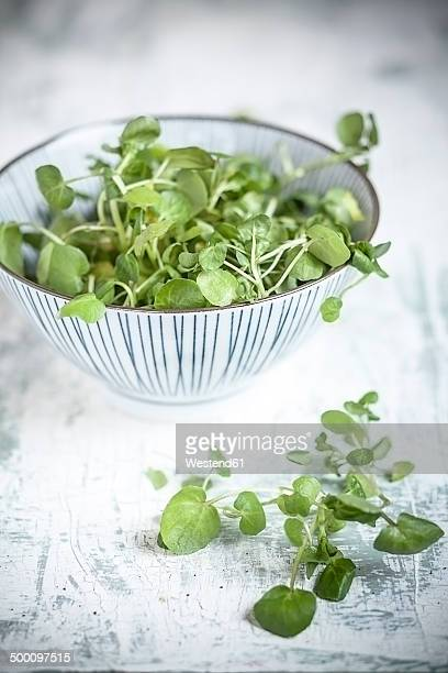 Common watercress in bowl