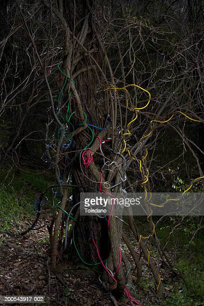 Communication cables wrapped around tree