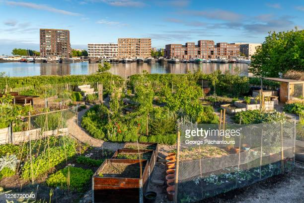 community garden in a residential area - self sufficiency stock pictures, royalty-free photos & images