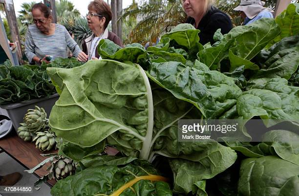 Community garden members sell their vegetable during Earth Day celebrations at the Growing Experience Urban Farm in Long Beach April 22 2015 The...