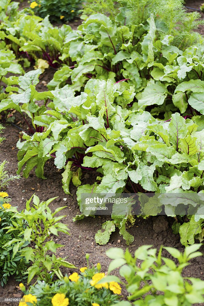 Community garden : Stock Photo