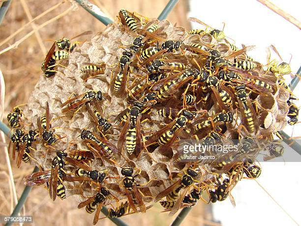 community  - paper wasp stock pictures, royalty-free photos & images