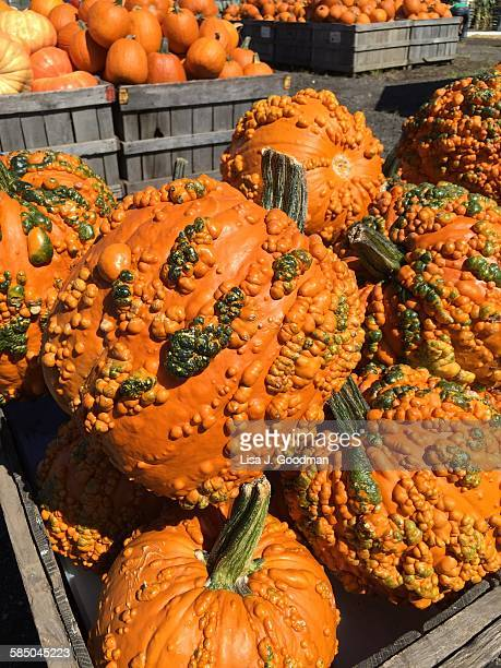 community  - ugly pumpkins stock photos and pictures