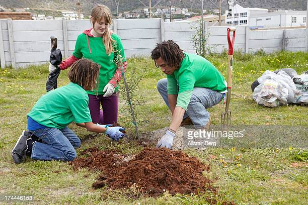 Community project to plant trees