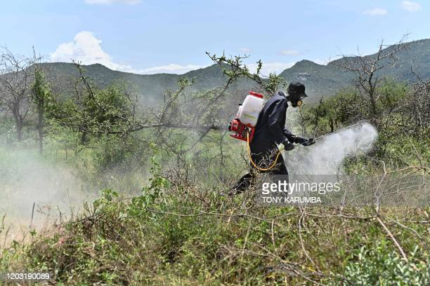A community volunteer uses a motorised spray to disperse pesticide on February 25 2020 at a hatch site near Isiolo town in Isiolo county eastern...