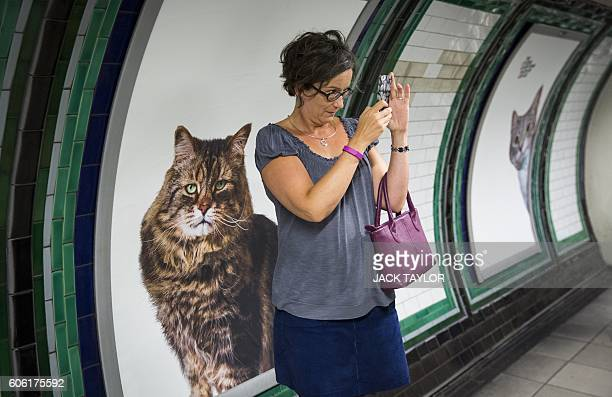 A commuter takes a 'selfie' picture with cat posters at Clapham Common Underground station in south west London on September 16 2016 Creative...