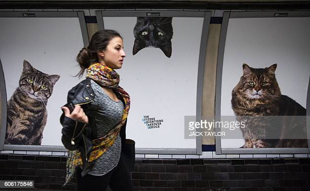 A commuter walks past cat posters at Clapham Common Underground station in south west London on September 16 2016 Creative collective Citizens...