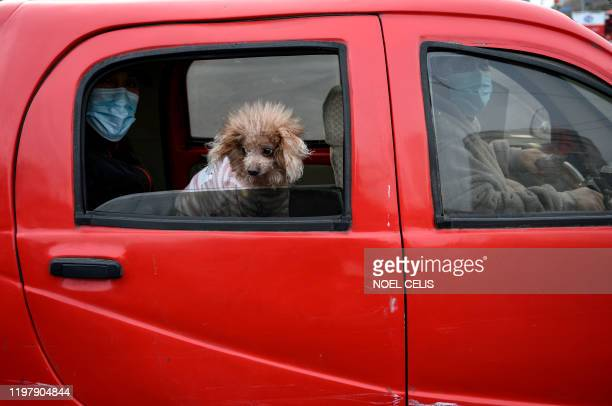 Commuters wearing facemasks sit on a car along with their dog in Beijing on Fabruary 1 2020 China faced deepening isolation over its coronavirus...