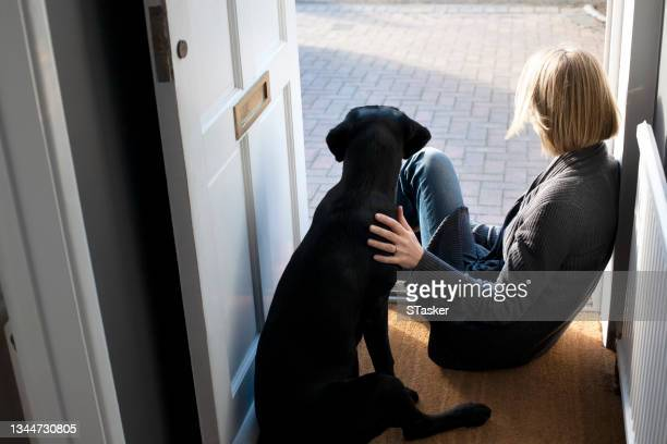 companion at home - st. albans stock pictures, royalty-free photos & images