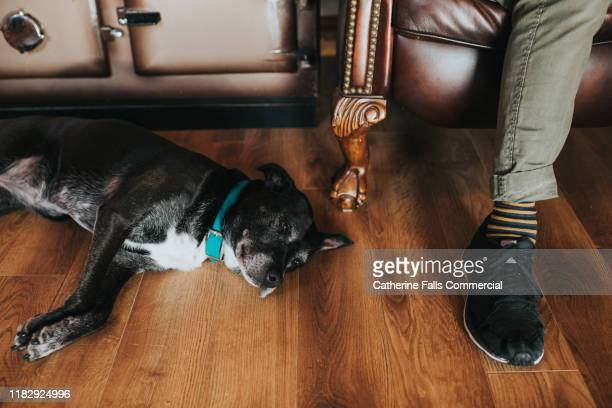 companionship - aga cooker stock pictures, royalty-free photos & images