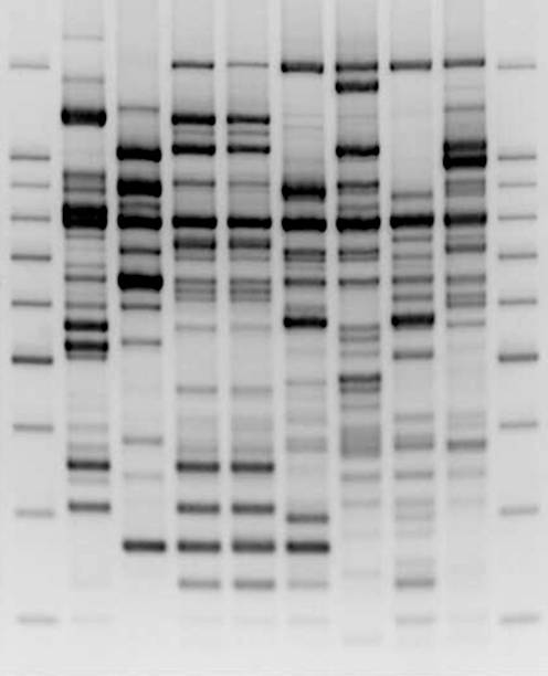 Comparative DNA Analysis Wall Art