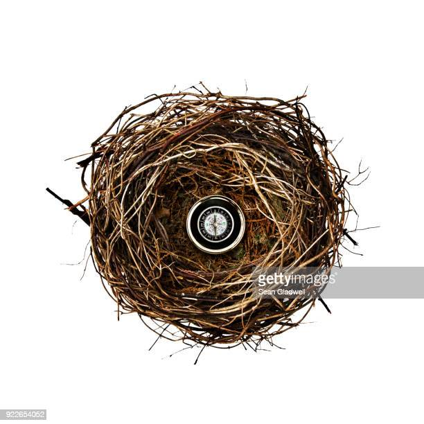 compass inside bird nest - west direction stock pictures, royalty-free photos & images