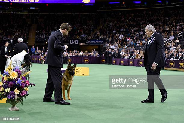 A competition judge awards handler Valerie NunesAtkinson and CJ a German Shorthaired Pointer the 'Best In Show' win during the second day of...
